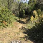 Gobbetto Trail Perugia Vecchia Park