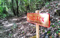 Old Fox Perugia Vecchia Park