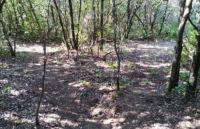Pepito Trail Perugia Vecchia Park
